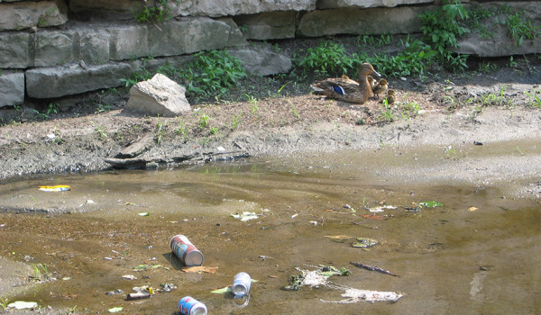 Homepage_Research_Litter in Urban Streams